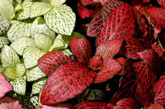 Flowers 79. Red green leaves plant organic background royalty free stock image