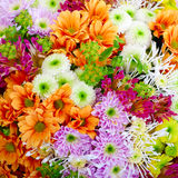 Flowers. Multicolor background made of different flowers Stock Photo