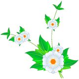 Flowers. Digital artwork, design element royalty free illustration
