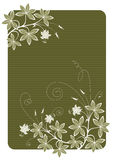 Flowers. Floral background. Detailed vector illustration Royalty Free Stock Images