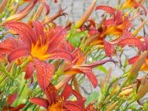 Flowers007 Fotografía de archivo
