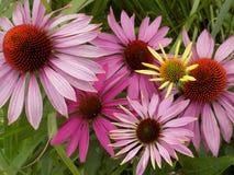 Flowers009 Fotos de archivo