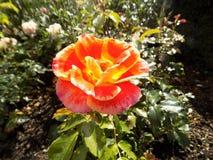 Flowers010 imagen de archivo