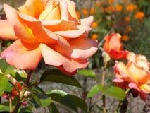 Flowers011 lizenzfreie stockfotos