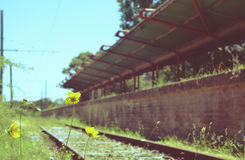 Flowers at an abandoned railway station Stock Image