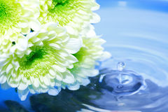 Flowers Above Water Stock Photography