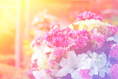 Flowers abstract blur Royalty Free Stock Images