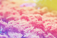 Flowers abstract blur Stock Image