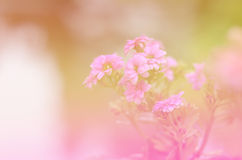 Flowers abstract blur Stock Photography