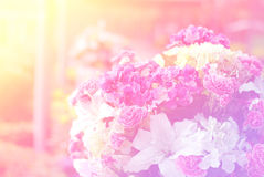 Flowers abstract blur Stock Photos