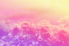 Flowers abstract blur Royalty Free Stock Image