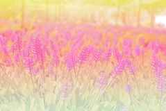 Flowers abstract blur Stock Images