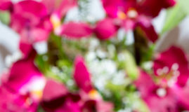 Flowers abstract blurred Stock Photo