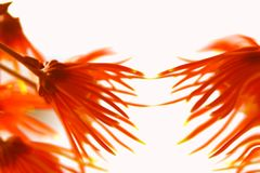 Flowers Abstraction Royalty Free Stock Photo