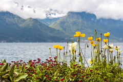 Flowers adorn the promenade in Montreux Stock Photo