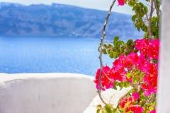 Flowers of Aegean Sea  in Oia Village on Santorini Island in Greece. Sea in Background stock photo