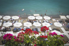 Flowers against the background of beach umbrellas, the sea and sky. In the background, beach umbrellas are not focused. Selected f Royalty Free Stock Image