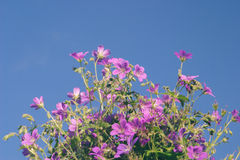 Flowers against blue sky Royalty Free Stock Photo