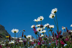 Flowers against blue sky background Royalty Free Stock Photos