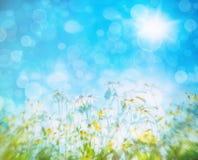 Flowers against a blue sky Royalty Free Stock Photos