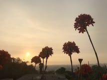 Flowers at sunset. Flowers against grayish sky Stock Photos