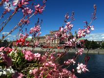 Flowers against the lake and the city, Stockholm background. royalty free stock images