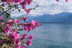 Flowers against mountains and lake Geneva Stock Image