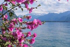 Flowers against mountains and lake Geneva Stock Photos