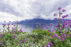 Flowers against mountains, Montreux. Switzerland. Flowers against mountains and lake Geneva from the Embankment in Montreux. Switzerland Royalty Free Stock Photos