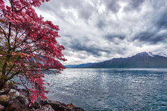 Flowers against mountains, Montreux. Switzerland Royalty Free Stock Images