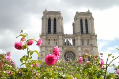 Flowers of Paris. Royalty Free Stock Photography
