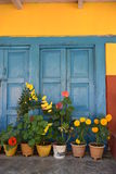 Flowers against painted walls Royalty Free Stock Photography