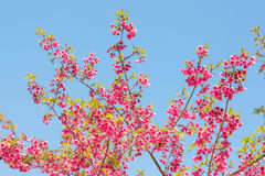 Flowers against the sky Stock Photography