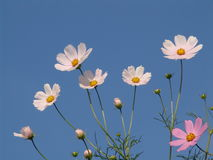 Flowers against the sky. Spring flowers against the sky Stock Image