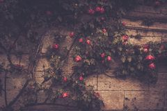 Flowers against stone wall Royalty Free Stock Photos