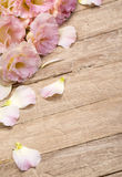 Flowers on aged wooden background. Royalty Free Stock Photos