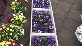 Flowers in agriculture fair stock footage