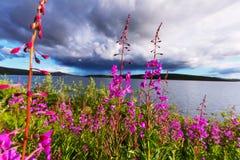 Flowers on Alaska Royalty Free Stock Photo