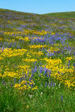 Flowers on alberta prairie Royalty Free Stock Photography
