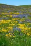 Flowers on alberta prairie Royalty Free Stock Photography