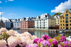 Flowers of Alesund Royalty Free Stock Images