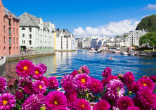 Flowers of Alesund Royalty Free Stock Image