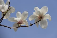 The flowers is alive and new. The spring is coming, flowers is so beautiful and fragrant Stock Photos