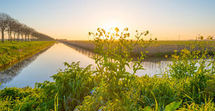 Flowers along a canal in sunlight Royalty Free Stock Photos