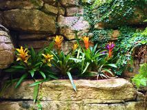 Flowers Along A  Rock Wall Royalty Free Stock Photos