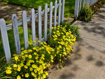 Flowers along the sidewalk. Picket fence and flowers along a sidewalk Royalty Free Stock Image