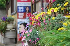 Flowers alongside the road in Tokyo, Japan. Colorful flowers alongside the road on Tokyo street. There are some Japanese political posters and more flower pots royalty free stock images