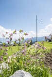 Flowers in alps Stock Photography