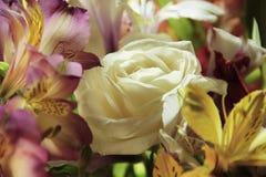 Flowers alstroemeria water,  greetingrain, rose. Flowers alstroemeria water rain rose greeting Royalty Free Stock Photography