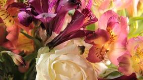 Flowers alstroemeria water, greetingrain, gardening rose. Flowers alstroemeria water rain rose greeting gardening stock video footage